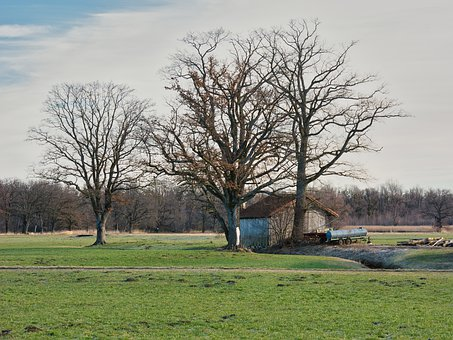 Trees, Hut, Barn, Individually, Autumn, Kahl, Aesthetic