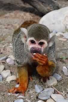 Monkey, Eat, Zoo, Sweet, Cute, Animals