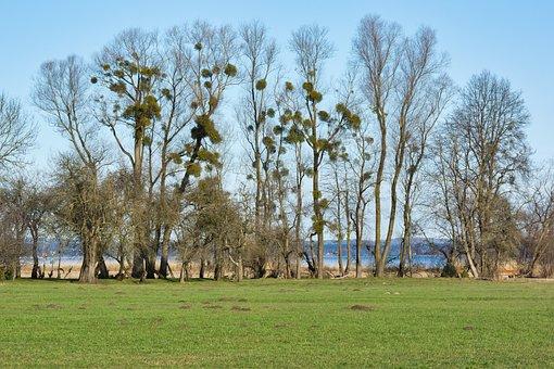 Trees, Mistletoe, Autumn, Kahl, Aesthetic, Silhouette