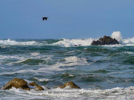 Mar, Bird, Great Cormorant, Waves