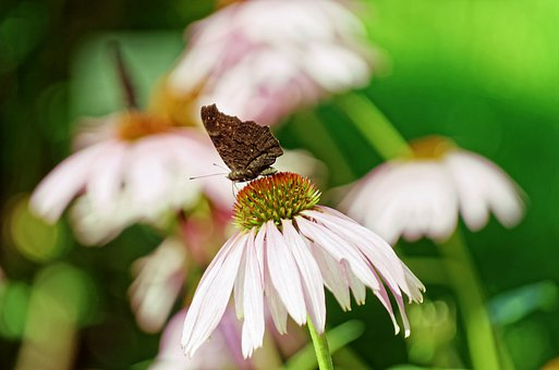 Butterfly, Placed, Flower, Petals, Pink, Stamens
