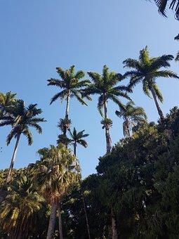 Coconut Tree, Sky, Tree, Landscape, Vegetation, Blue