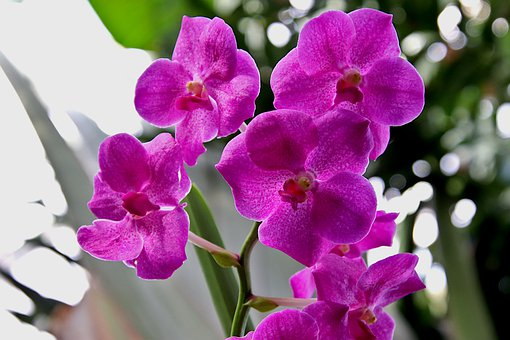 Orchid, Color Pink, Plants, Flowers, Botany, Greenhouse