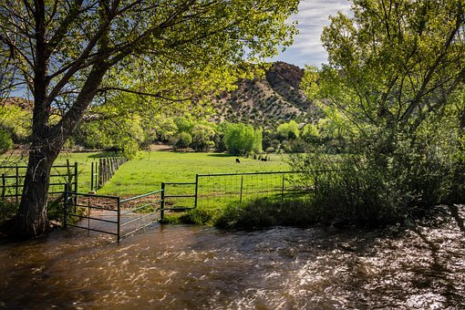 Stream, Cows, Pasture, Mountains, Creek, Water, Grazing