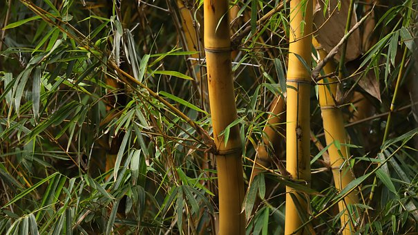 Bamboo, Texture, Pattern, Nature, Decorative, Leaves