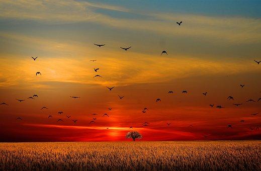Sky, Freedom, Seagull, Sunset, Nature