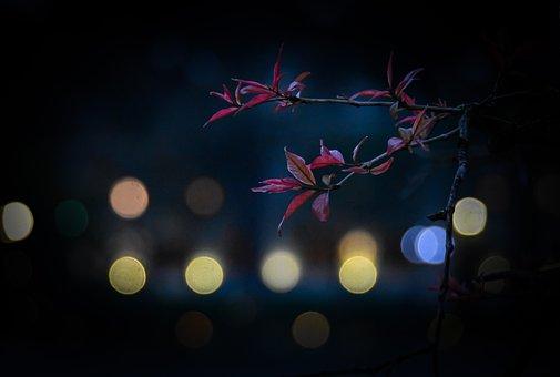 Lake, Flowering, Lagerstroemia, Spring, Purple Flowers