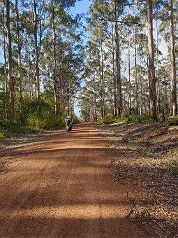 Bush, Western Australia, Australia, Bushland, Landscape