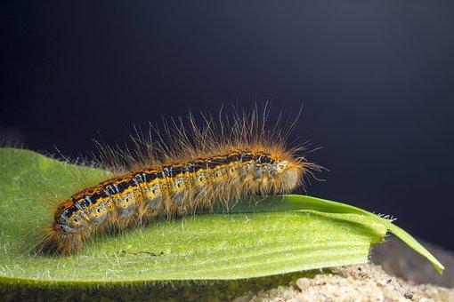 Catepillar, Larva, Butterfly, Worm, Leaf, Macro, Summer