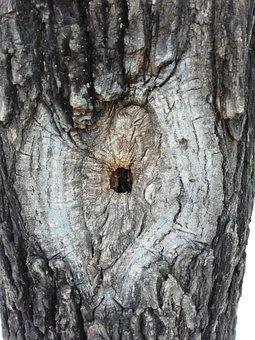 Magic, Tree, Cave, Natural, Close-up, Gray Magic