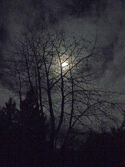 Winter Moon, Moon, Winter, Night, Nature, Wintry