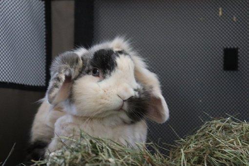 Animal, Pet, Cute, Small, Playful, Eyes, Funny, Rabbit
