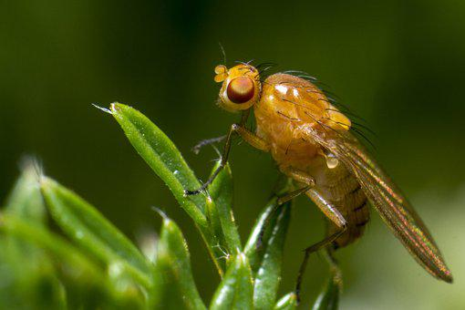 Fly, Compound, Big, Eyes, Herb, Leaf, Blurry, Small