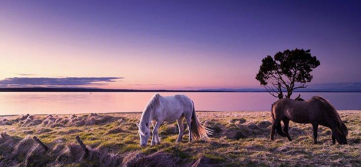 Nature, Sea, Horizon, Calm, Sky, Lake, Take It Easy