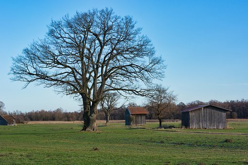 Tree, Hut, Barn, Individually, Autumn, Kahl, Aesthetic