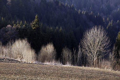 Trees, Shrubs, Light, Bavarian Forest, Nature, Mood