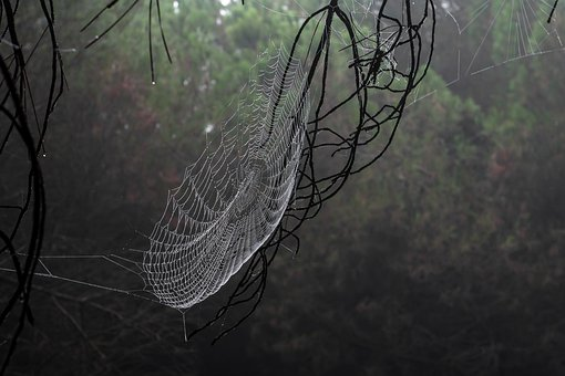 Canvas, Spider, Morning, Wet, Drop