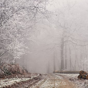 Forest Of Carnelle, Gel, Fog, France, Winter