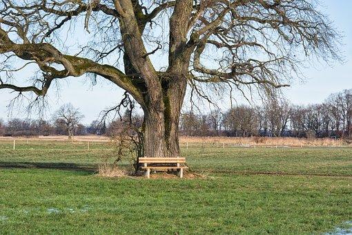 Tree, Tribe, Oak, Bench, Seat, Bank