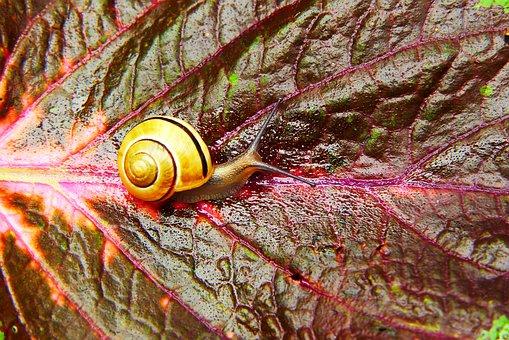 Wstężyk Huntsman, Snail, Plant, Leaf, Color, Beautiful