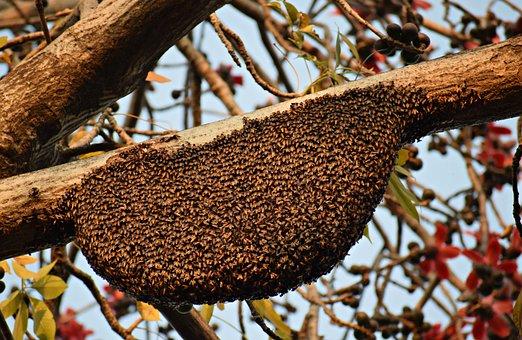 Honeycomb, Beehive, Honey, Bee