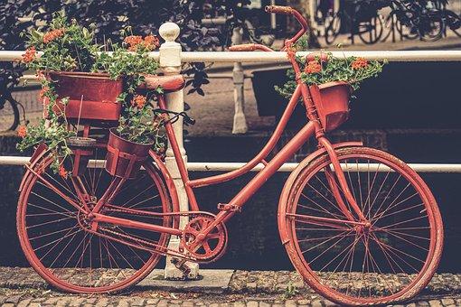 Bike, Velo, Wheel, Two Wheeled Vehicle, Color, Colorful