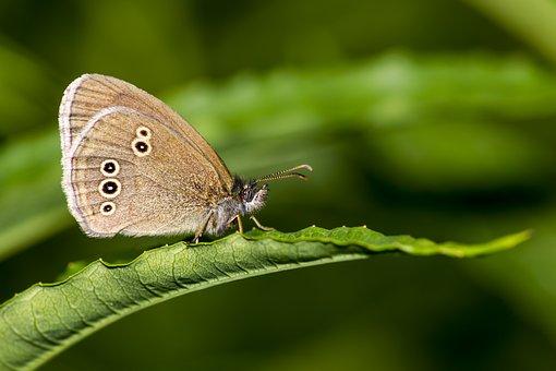 Butterfly, Portrait, Closeup, Grass, Herb, Walking, Day