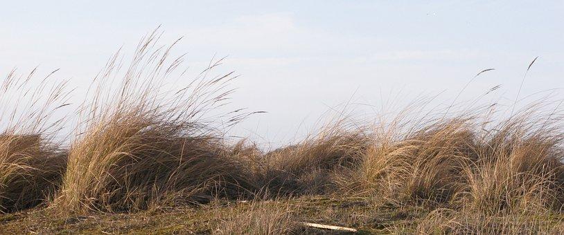 Dune, Wind, Grass, Sand, Nature, Dunes