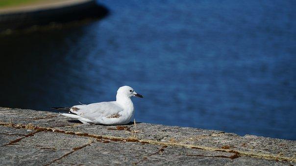 Seagull, Harbor, Bird, Water, Nature, Harbour, Fishing