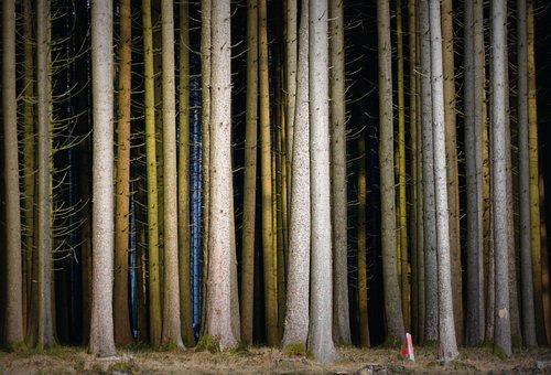 Forest, Mood, Light, Trees, Strains, Sunbeam, Romantic