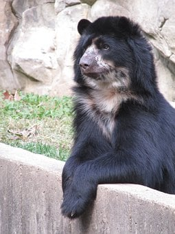 Bear, Brown, Mammal, Nature, Fur, Teddy, Heart