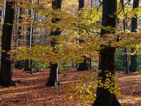 Forest, Autumn, Nature, Landscape, Trees, Leaves, Light