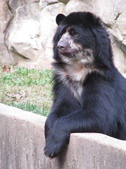 Bear, Brown, Mammal, Nature, Fur, Teddy