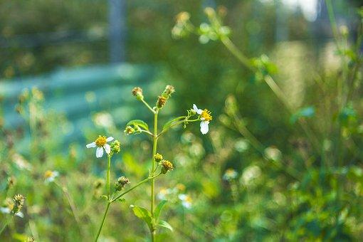 White, Green, Plant, Food, Nature, Spring, Organic, Bug