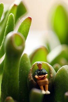 Macro, Figure, Miniature, Small, Reading, Plant