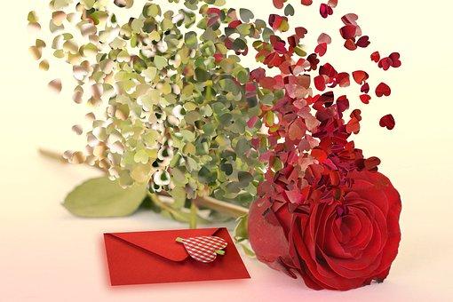 Romantic, Valentine, Red Rose