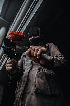 Rose, Roses, Multi, Flower, Increase, Weak, Valentine