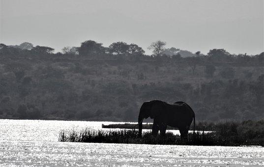 Elephant, Uganda, Silhouette, Africa, Wildlife, Safari