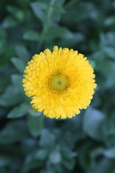 Flower, Yellow, Sunflower, Nature, Spring, Blossom