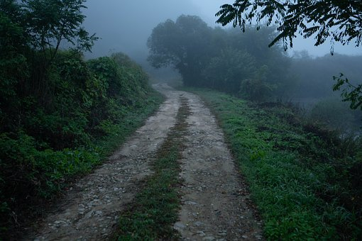 Early Morning, Path, Road, Summer, Mist