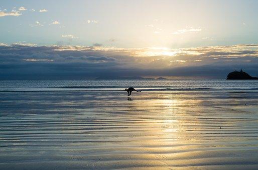 Australia, Beach, Queensland, Nature, Kangaroo, Animal