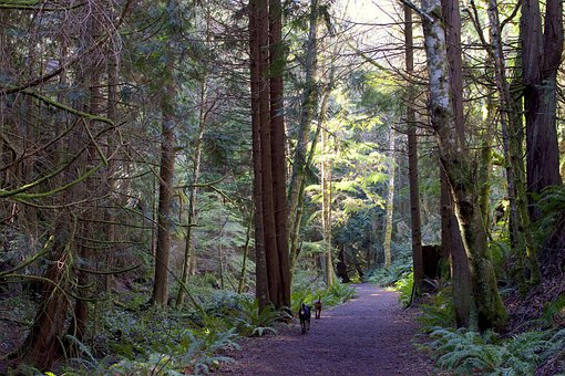 Vancouver Island, Canada, Landscape, Nature, Victoria