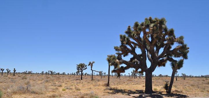Desert, California, Joshua Tree, West, Dry, Sunny
