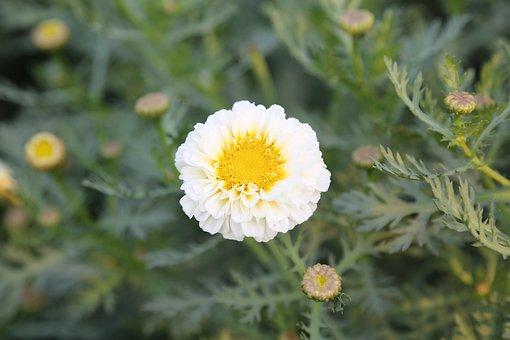 Flower, White, Spring, Bloom, Garden, Plant, Nature
