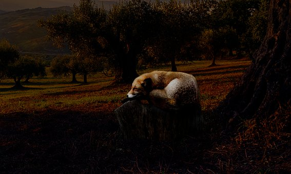 Fantasy, Fox, Tree, Ground, Yellowish Ground, Day Light