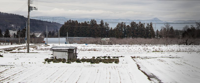 Shed, Snow, Rice Paddy, Mountains, Winter, Nature