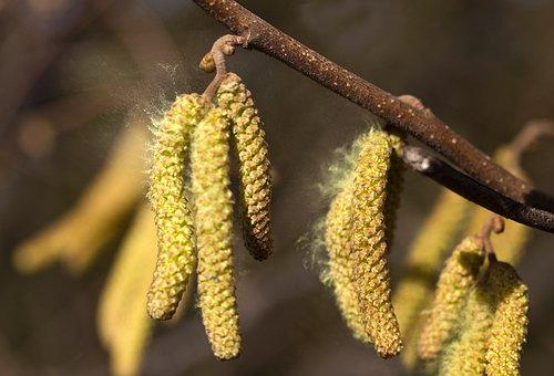 Pollen, Allergy, Spring, Nature, Blossom