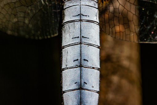 Blue Arrow, Study, Nature, Dragonfly, Insect, Macro