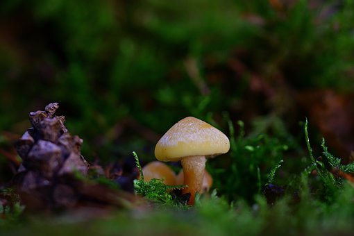 Nature, Forest, Mushroom, Moss, Hidden