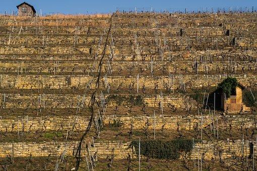 Vineyard, Germany, Europe, Nature, Winegrowing
